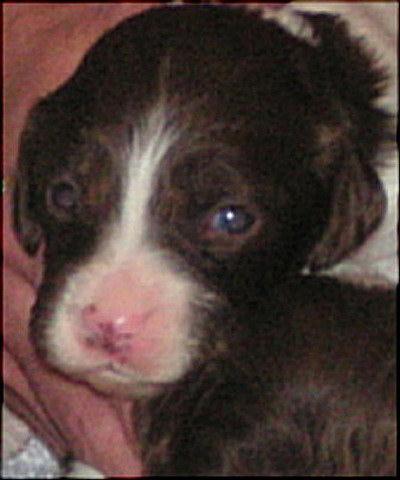 Asha the Pup
