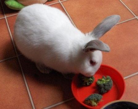 Bran the Bunny