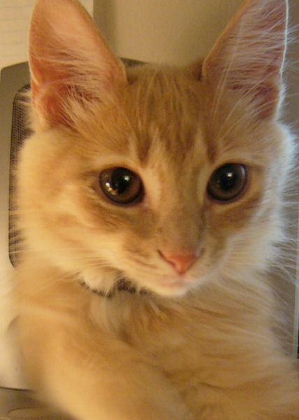 Kitten Nymeria